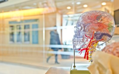 Entrepreneurial Success Starts With Training Your Brain
